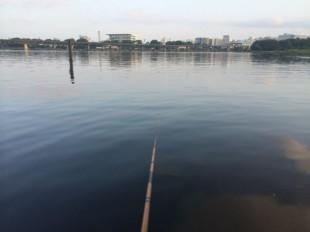 京浜運河ハゼ釣り