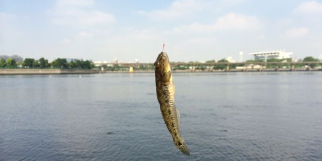 haze_fishing_20140822-02