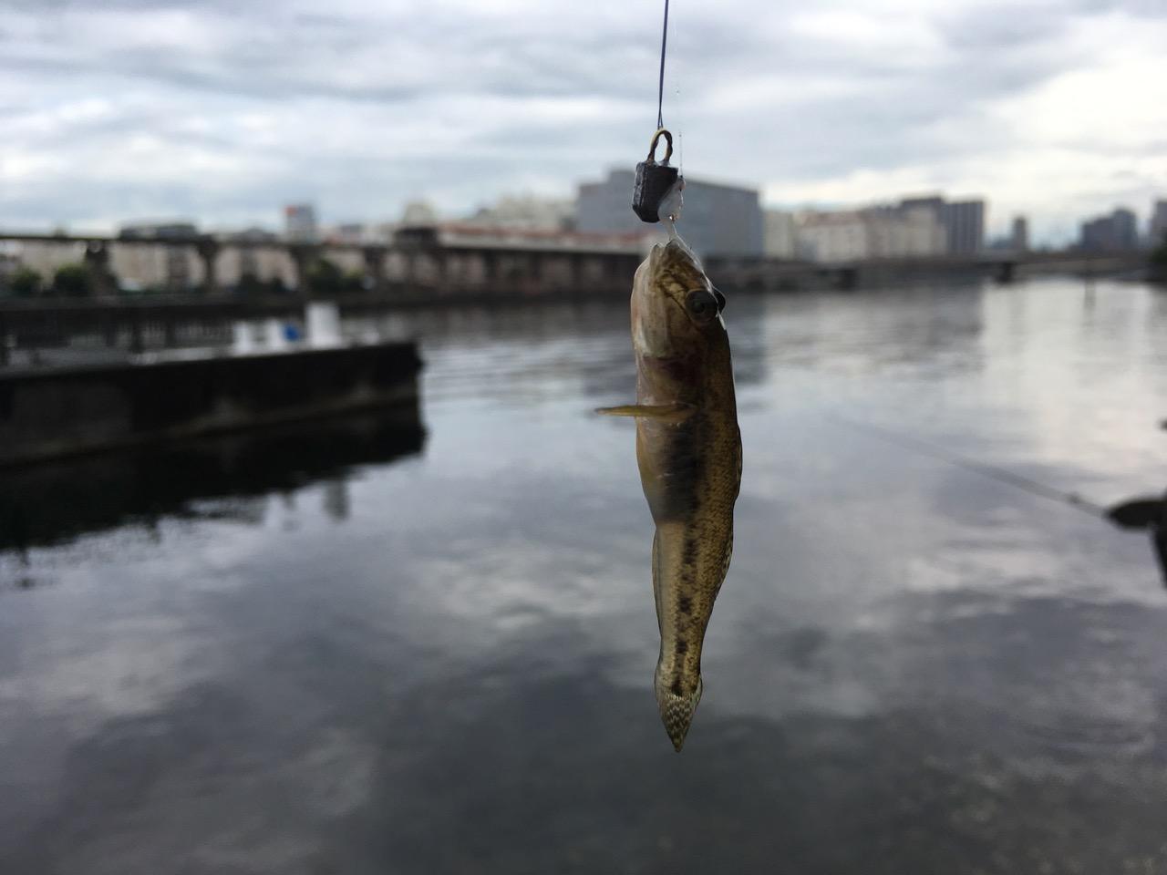 京浜運河でハゼ釣り